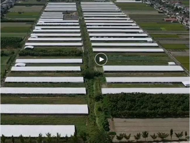江蘇省海安縣李堡鎮一養鴨場污水直排河道水質污染嚴重誰來管