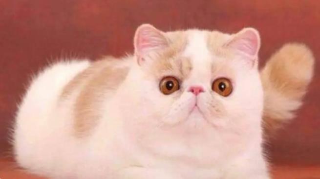 普贝斯:猫咪向你眨眼睛是在撩你吗