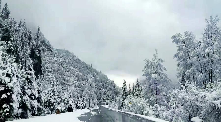 毕棚沟迎来了立秋后首场雪