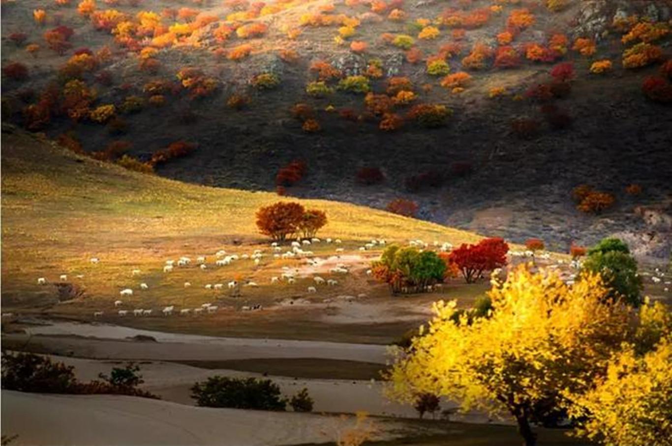十一假日锡林郭勒草原风景大道自驾嘉年华