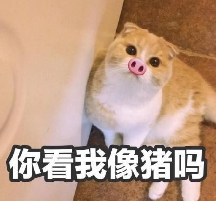 猫咪表情包合集|你看我像猪吗