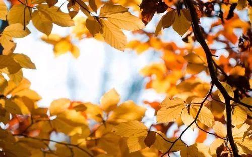 秋季唯美摄影桌面壁纸[250x1600]图片