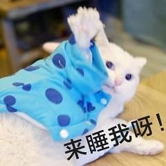 <b>猫咪撩老公表情包合集|好困困,要老公亲亲才起来</b>