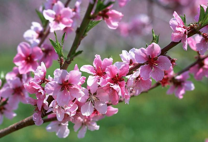 桃花最旺的3个生肖男,身边从不缺异性,你的桃花有多旺?