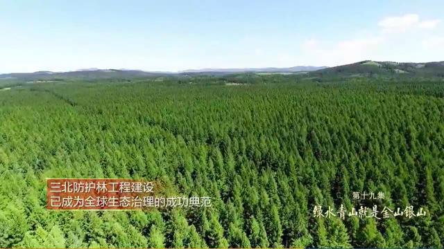 走在大路上·细节|三北防护林工程有多大
