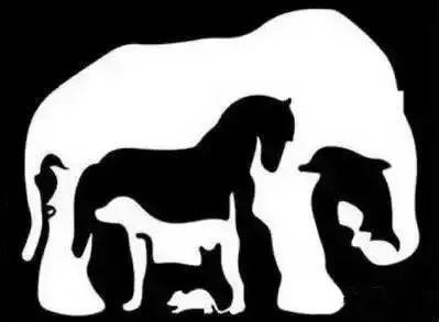 你第一眼看到的是什么动物,看穿你的脾气和个性!