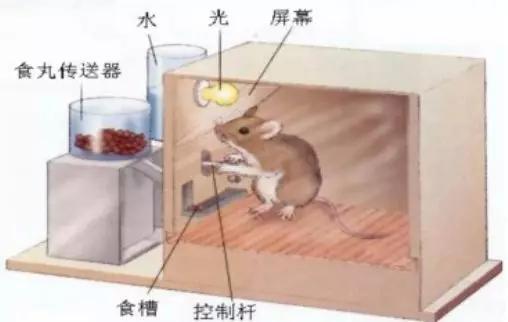 """<b>常考教育心理学实验:斯金纳""""白鼠实验""""</b>"""