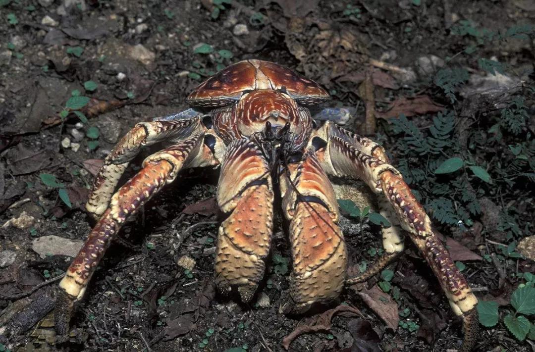 地球上10种濒临灭绝的动物,第三种仅剩160只