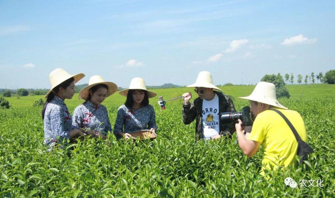 最新农业动态与市场热点