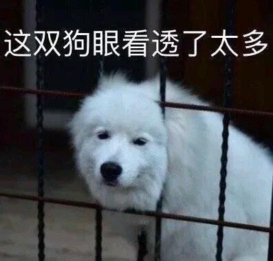 累成狗搞笑图片_狗狗表情包合集|我怎么活成这副狗样_侵权