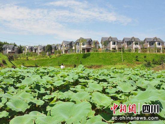 新中国成立70周年泸州乡村振兴和脱贫攻坚成就新闻发布会举行