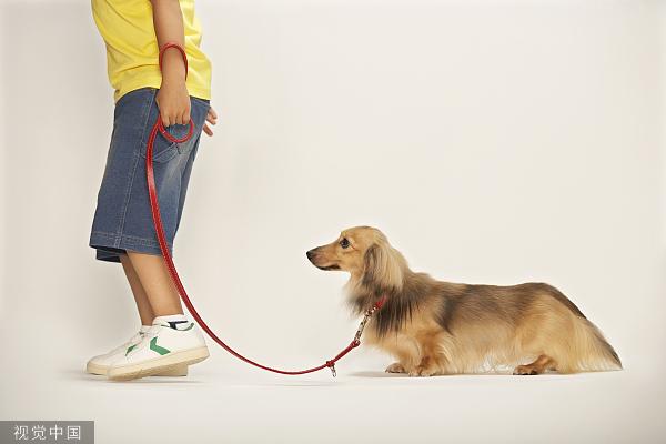 合肥就养犬地下收罗看法:16岁以下不克不及伶仃遛狗