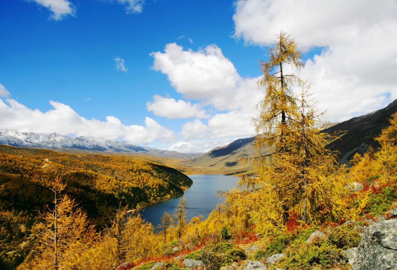 金秋十月,是景区一年中妖娆多姿的季节。天高水远,风轻云淡,各色高山灌丛颜色渐变,五彩斑斓的彩林比夏花还要妖艳动人,如果说秋天哪里独得上苍恩宠,川西绝对是当仁不让的所在,尤其是康定情歌(木格措)景区的七色海,仿佛是金秋的调色板,色彩从这里开始,光影从这里渐变,东到雅加埂西出新都桥,美得让人神往。 景区以乘车加徒步结合方式游览,在游客中心乘车前往木格措停车场(上行途中不停车),下行在木格措、红石滩、药池沸泉、七色海等区域设立候车站点,(下行途中在各站点依次停车)景区内观光车以公交车形式运行,景区成人票105