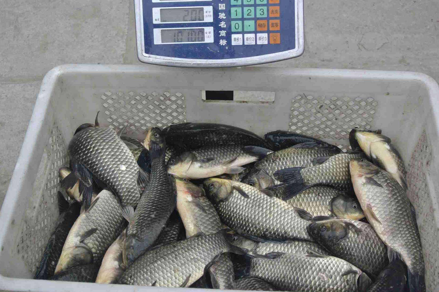 什么钓鱼小药在钓鱼时好用钓鱼小药的添加技巧和奥妙所在
