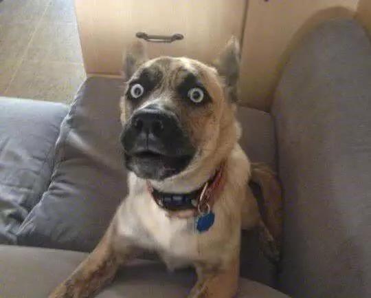 """几道题,测试你的狗是否有""""老年痴呆""""倾向"""