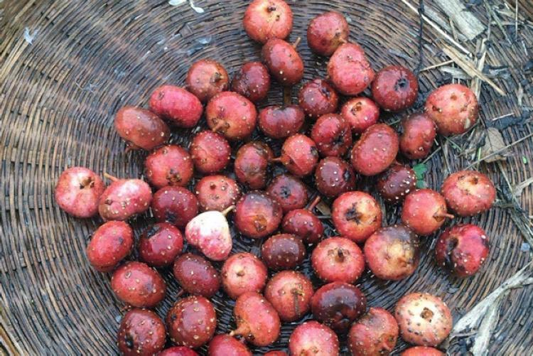山上一种植物,果实香甜藏在土中,乡下孩子都吃过,如今少见