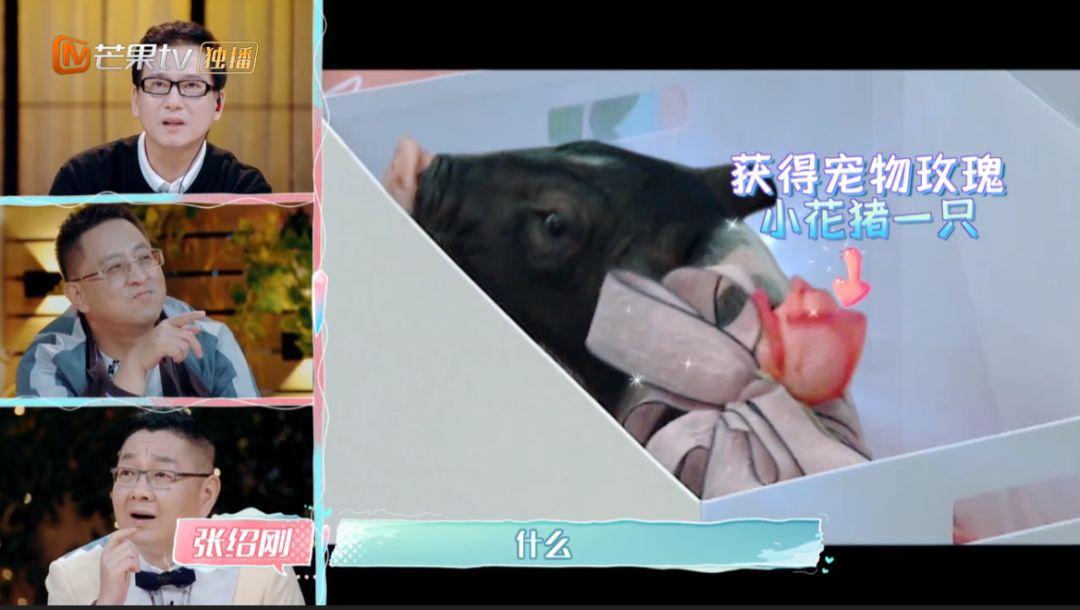 张恒送郑爽一只猪,爱养奇葩宠物的明星真很多!