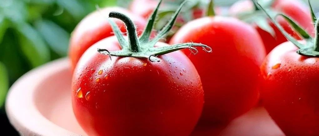 番茄怎么吃才更健康?背后的秘密你可能不知道!