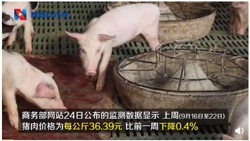 30000吨猪肉都来了,v猪肉有多大?猪肉冷藏库照片图片