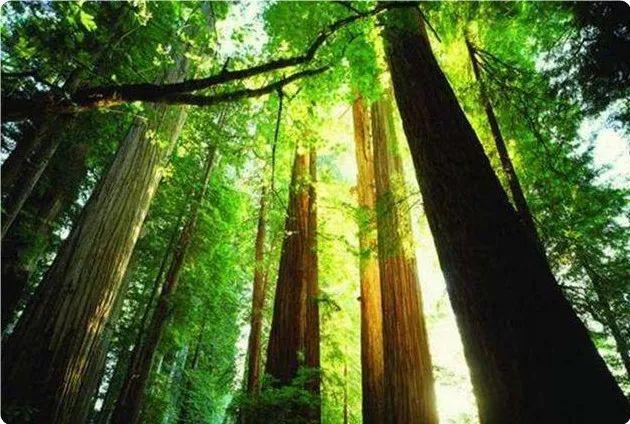 缅甸将柚木、铁木等数十种树木列为全国禁止砍伐的树木种类