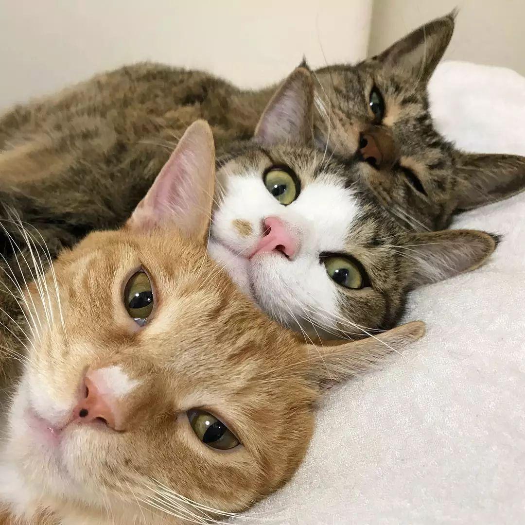 """日本这三只猫的床照,完美诠释了什么叫""""年轻人觉少""""…哈哈哈!"""