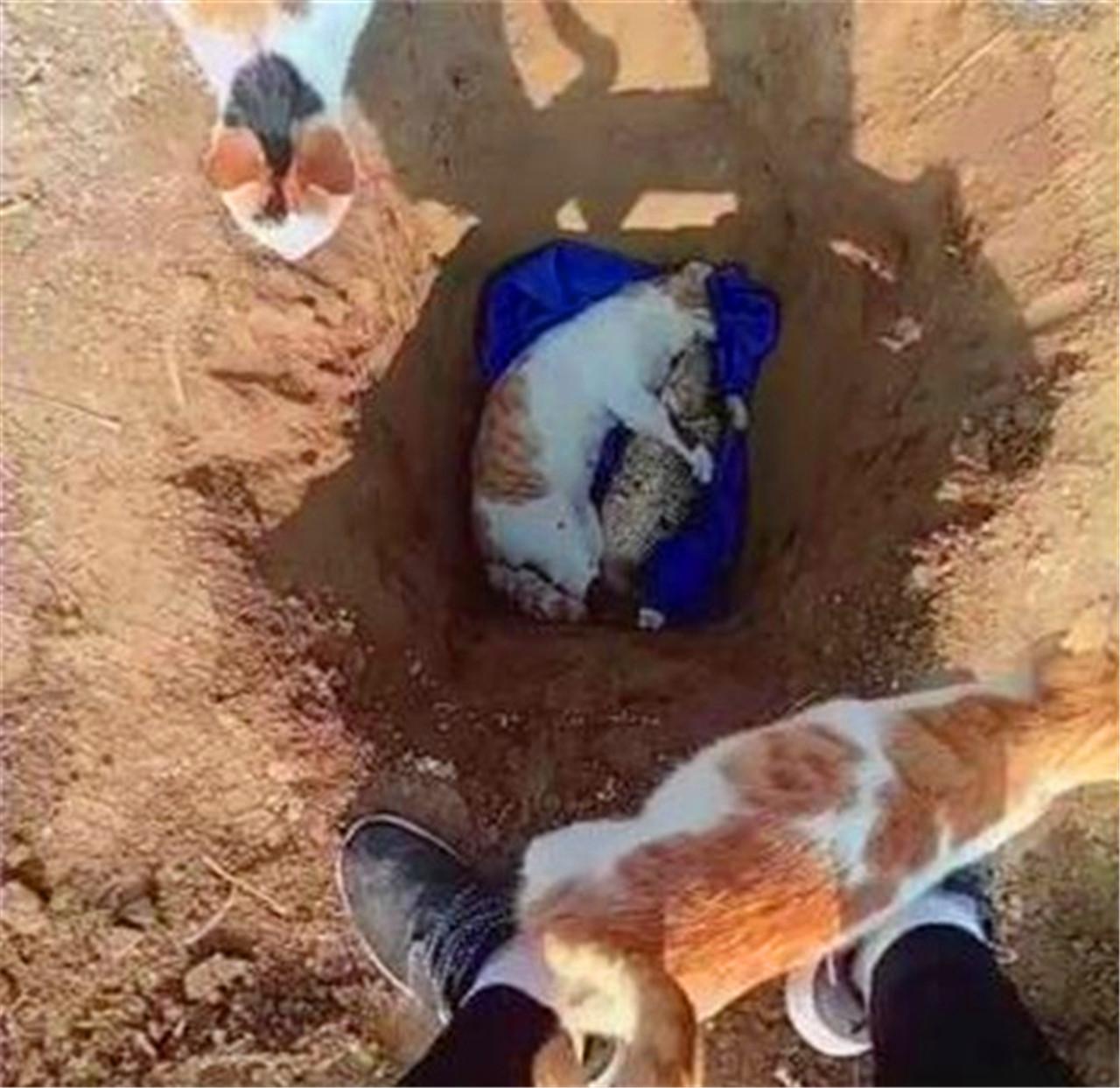 <b>猫咪不幸死了,善良的主人把一条活鱼作为猫咪的陪葬品!</b>