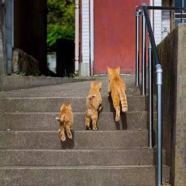 摄影师跟踪3只小橘,拍到趣味生活~