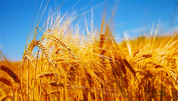 农业乡村部部长:中国成功处理了14亿人的吃饭成绩,根本清除乡村相对贫苦