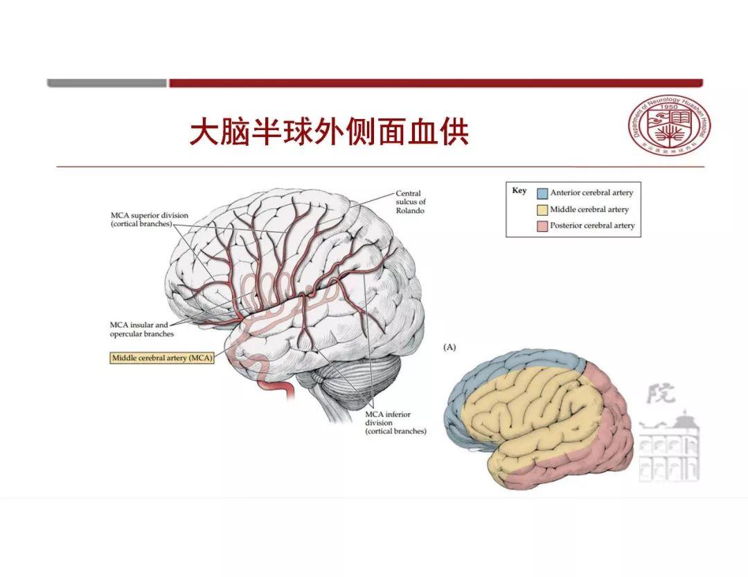 简述大脑半球的外形和内部结构?