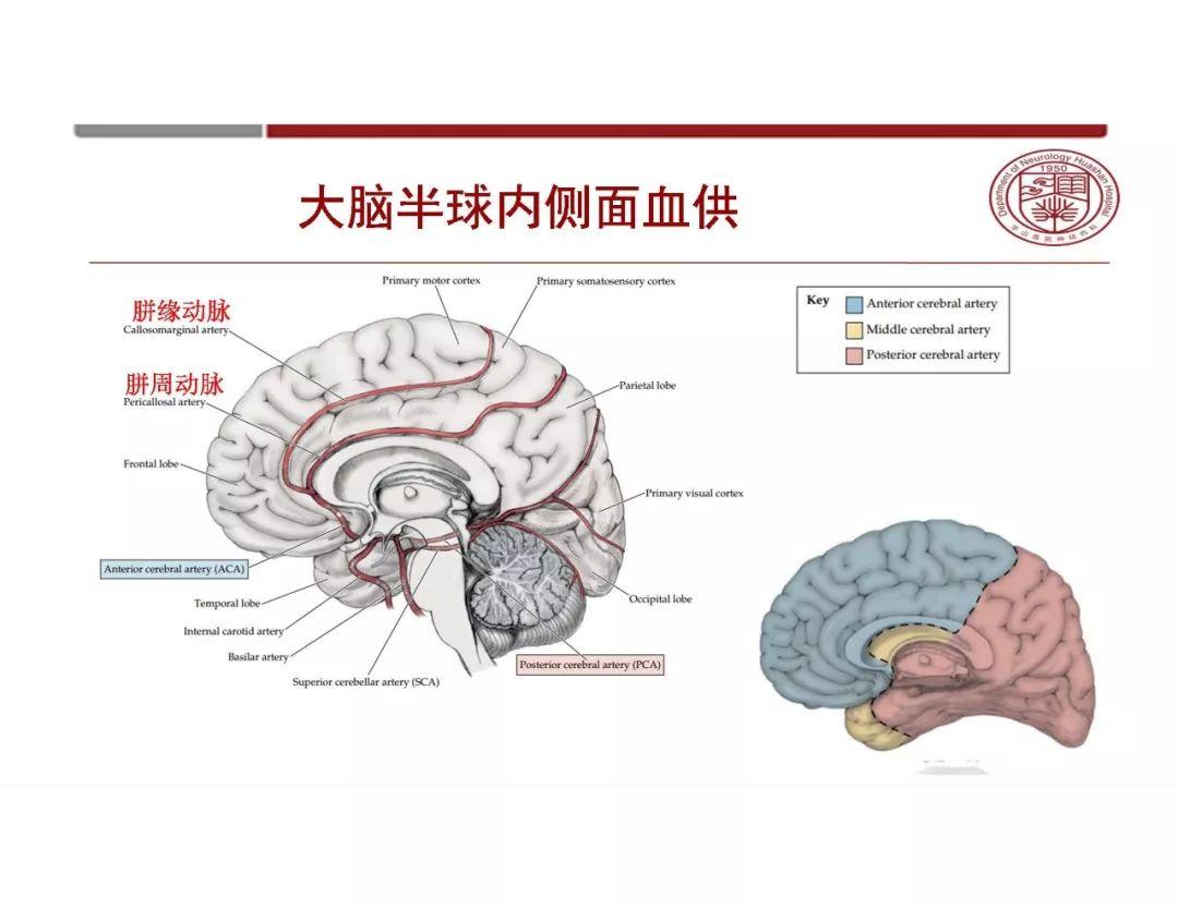 """大脑左右半球-什么叫大脑""""优势半球""""与交叉支-爱问知识人"""