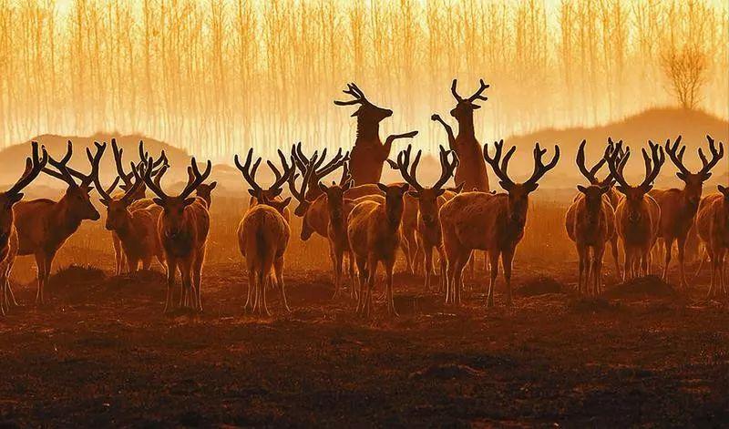 美图|大美湿地 神鹿家园