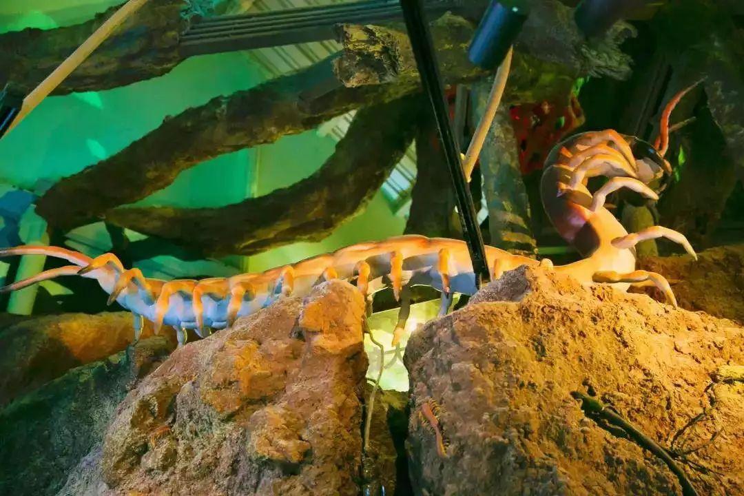 正佳广州-打卡国内shou家室内热带雨林~通用不加收~148元=2大2小门票~15000㎡+800奇妙生物~随时玩随时去