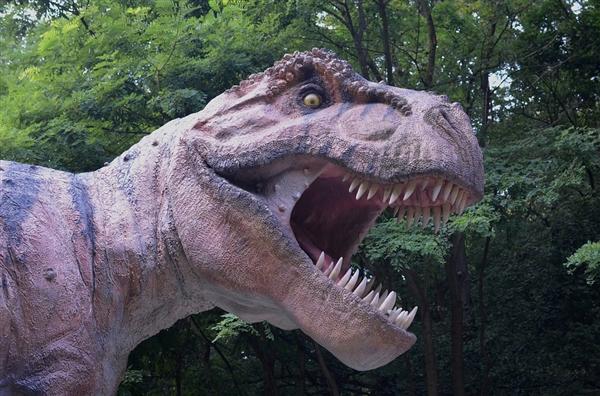 <b>地球上咬合力最凶猛动物:撕咬力达5.8吨</b>