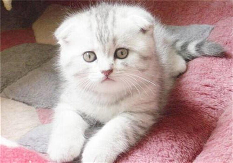 你家猫咪有抓人的坏习惯该怎么办呢