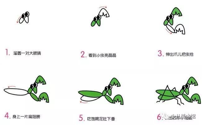 简笔画小螳螂的简单画法 幼儿园简单的简笔画
