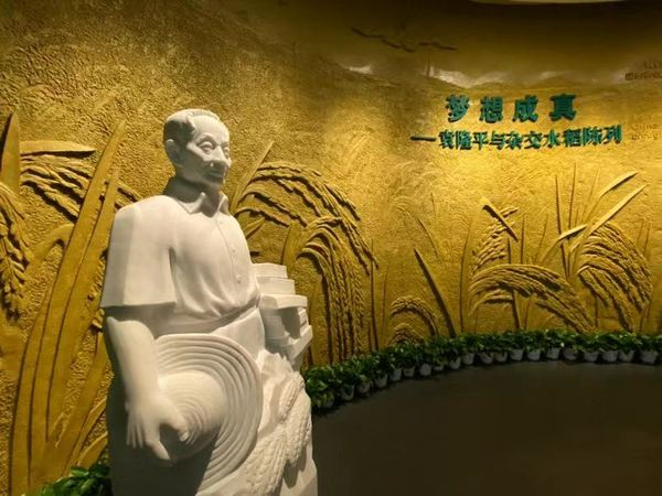 全国唯一水稻博物馆在湖南长沙正式开馆