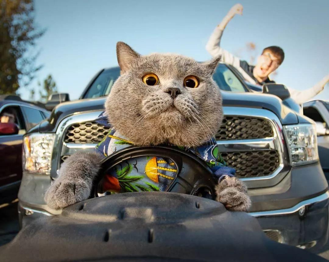 婚禮請貓來當伴郎,風頭完全被搶!網友一看,原來是它啊!難怪.......