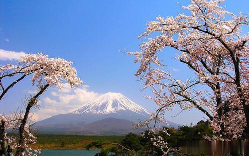 日本旅游中国人最多,你打算什么时候去看看?