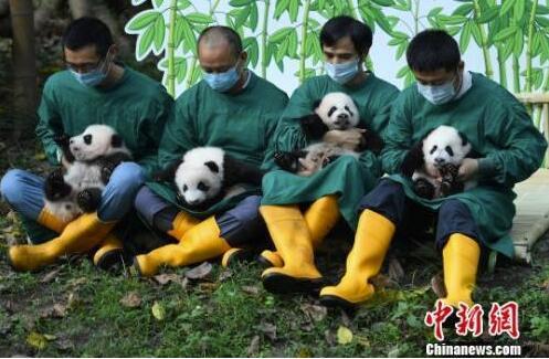 """""""两层喜庆"""" 重庆动物园两对双胞胎大熊猫被正式命名"""
