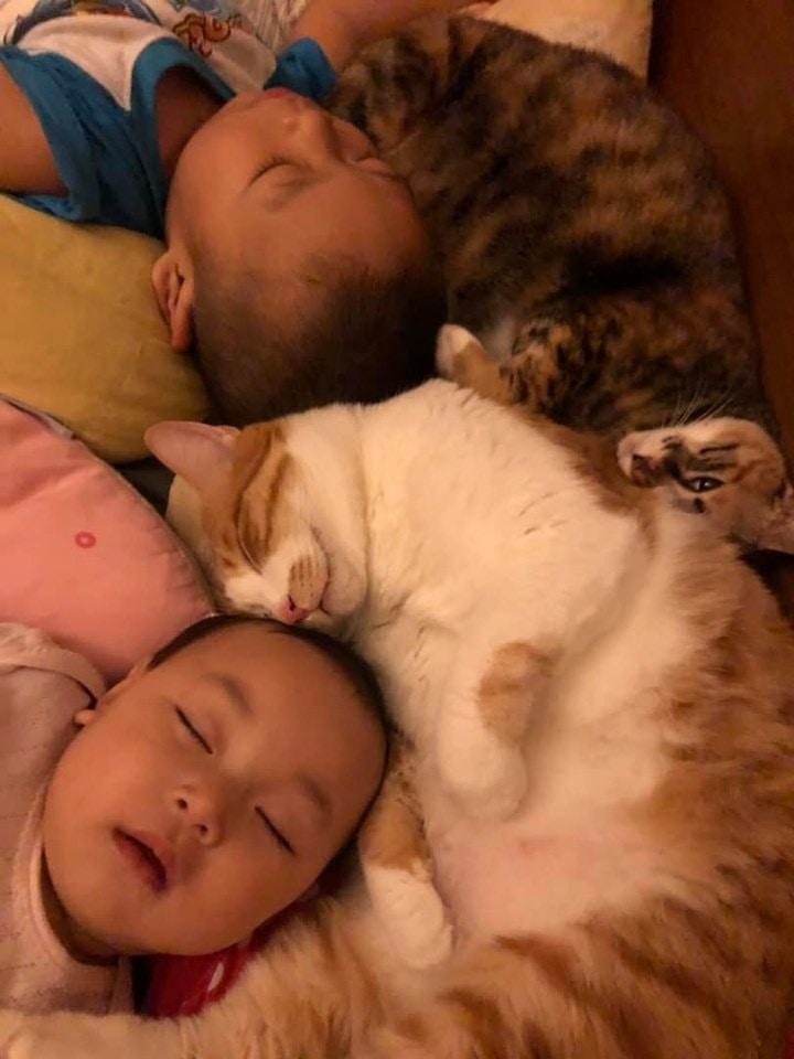 原創2萌娃6貓咪擠在一起睡,媽媽見甜蜜畫面暖笑:天氣變冷了?