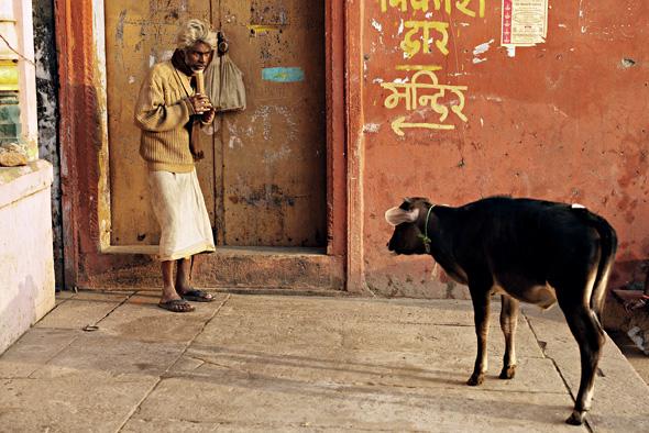 印度聚众喝牛尿这是真的吗?印度聚众喝牛尿事件始末