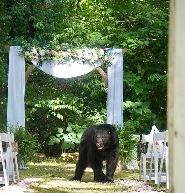 蹭喜酒!美國田納西州一隻黑熊現身新人婚禮現場