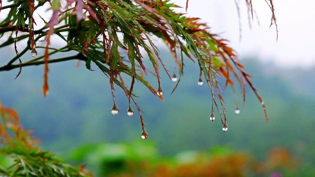 降温 降水 明天起,大荔要连下4天雨,最低气温10