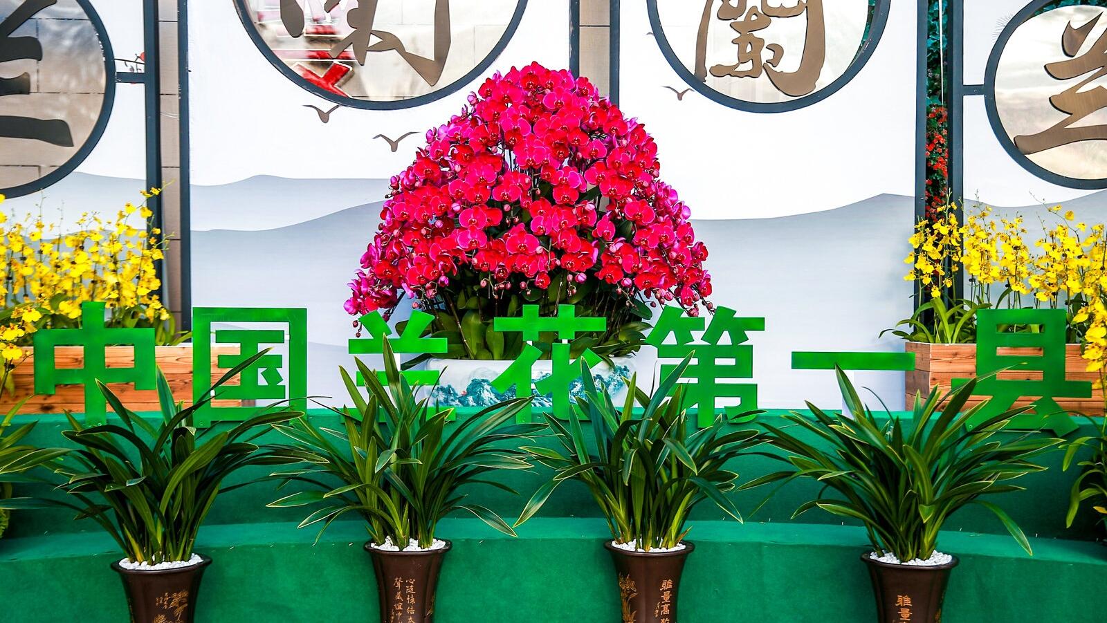 韶关翁源丰收节瓜果飘香兰花韵美还有超多客家美食(图7)