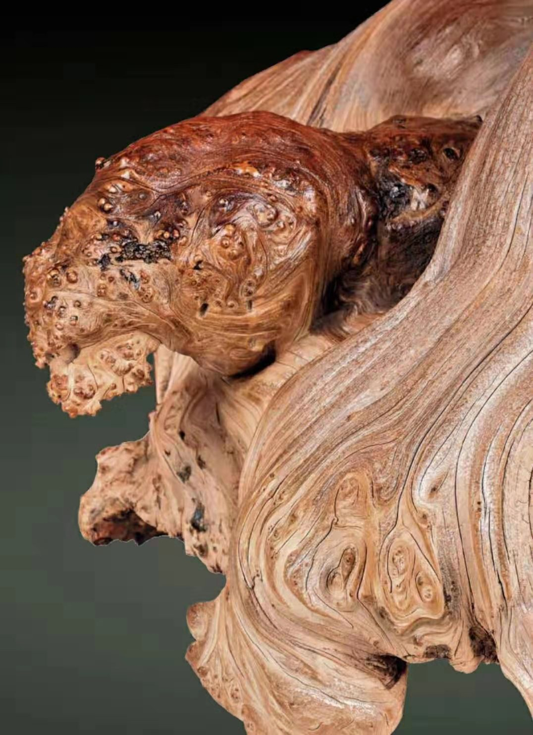 天然崖柏奇木 灵龟戏金蟾 在重庆崖柏文化会将首次展示