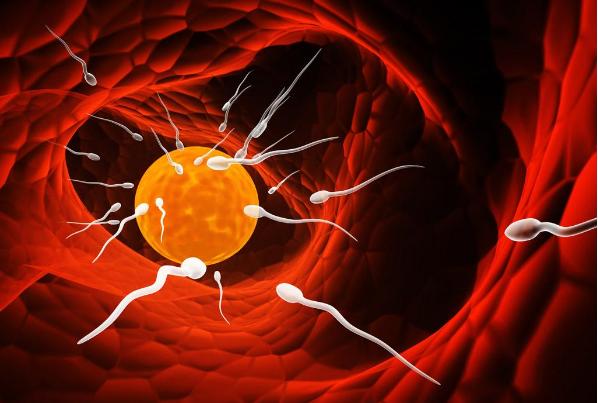 精子和卵子结合需