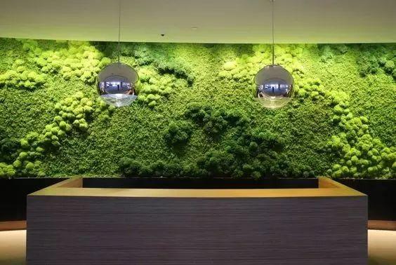 分享|植物也可以这样上墙!