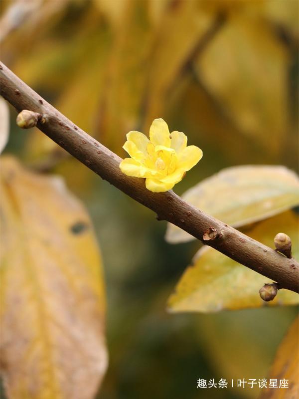 再强势的狮子座,遇见了这个星座,也会从心底开出一朵柔软的花