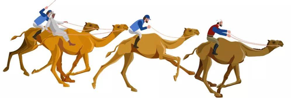 骆驼文化展示及赛驼比赛引围观