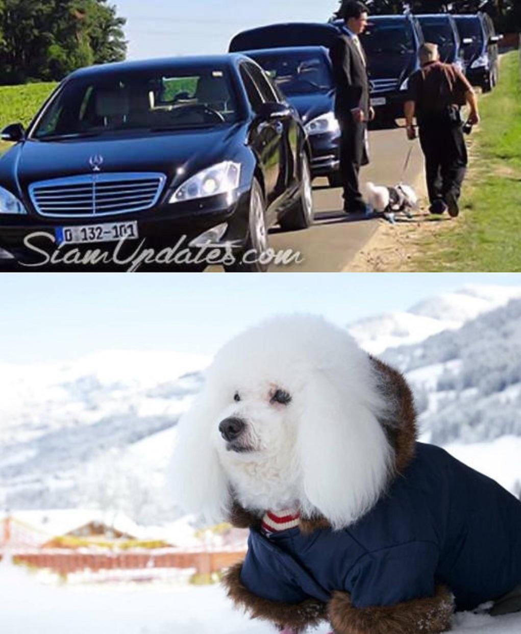 有其父必有其女!67岁泰王出席公务带宠物犬,小女儿也有样学样